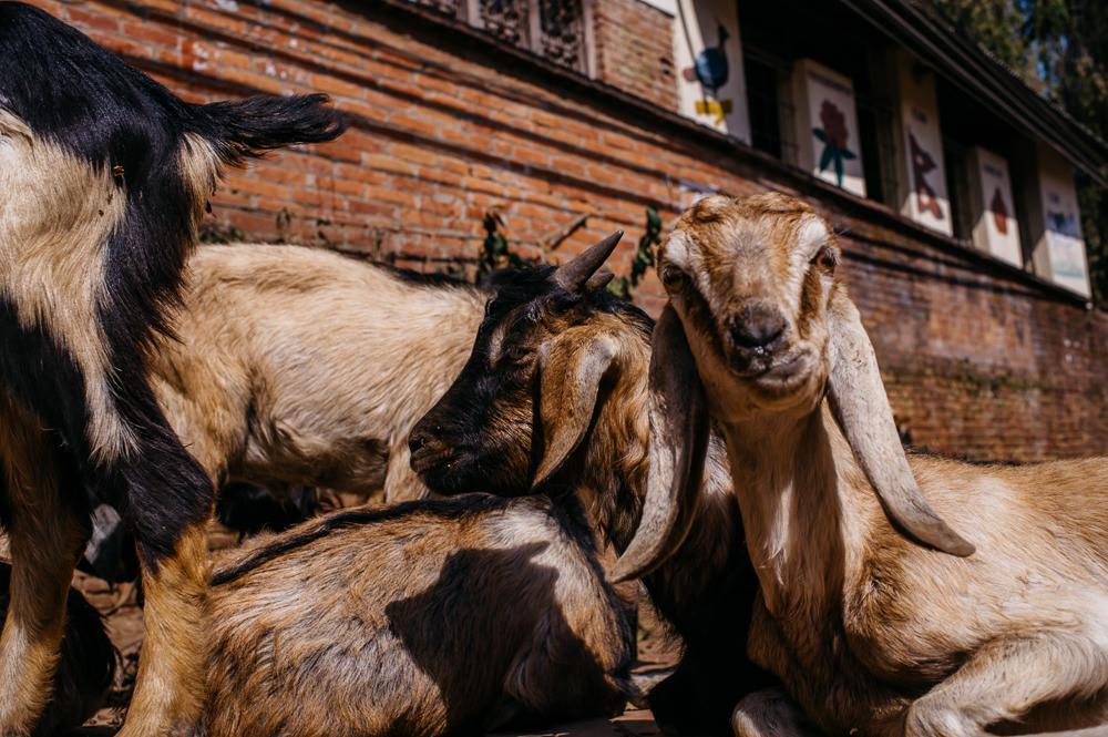 3_Nepal_074