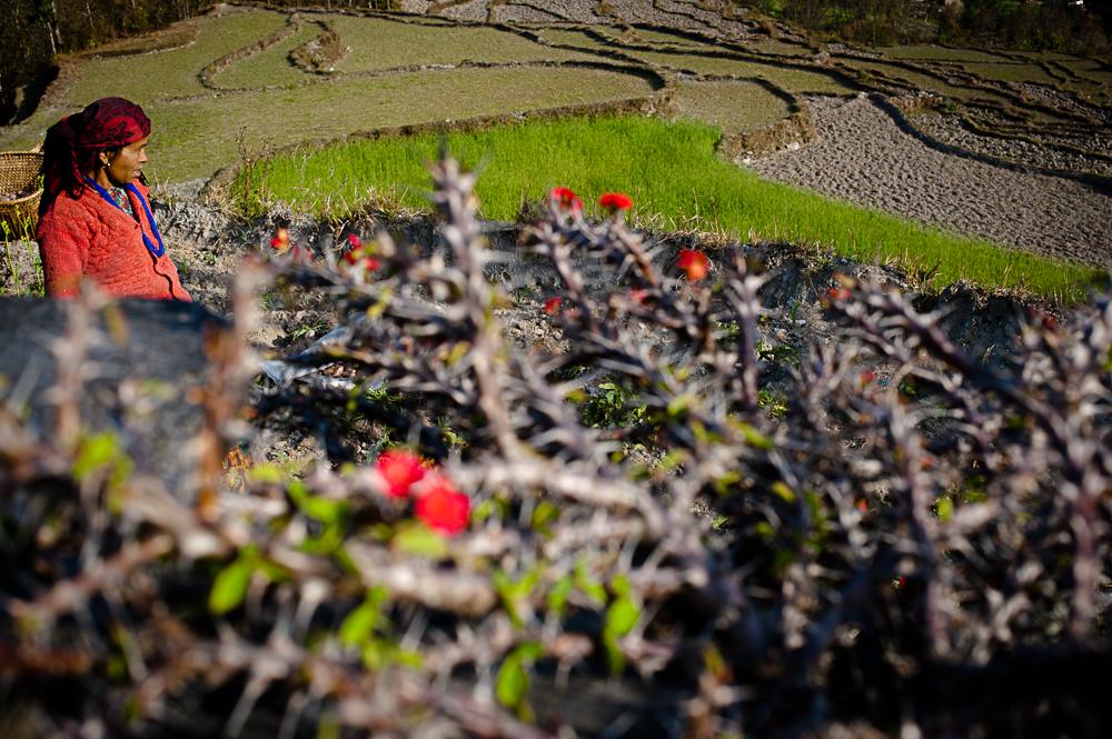 3_Nepal_101