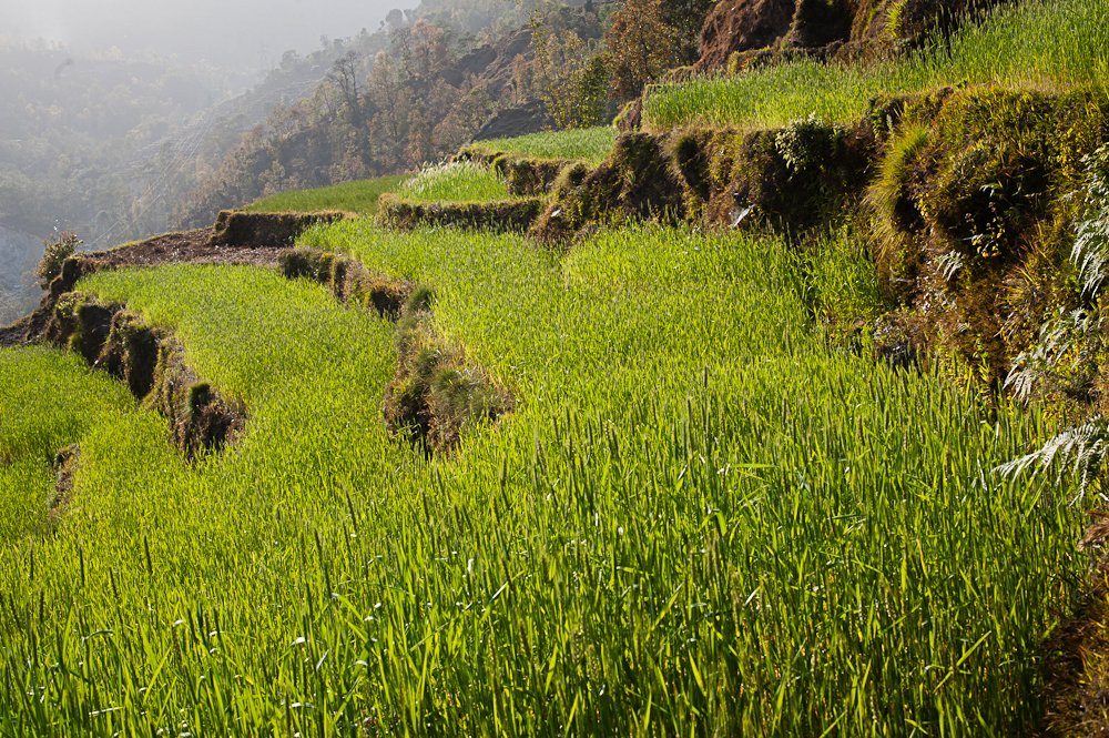 3_Nepal_106