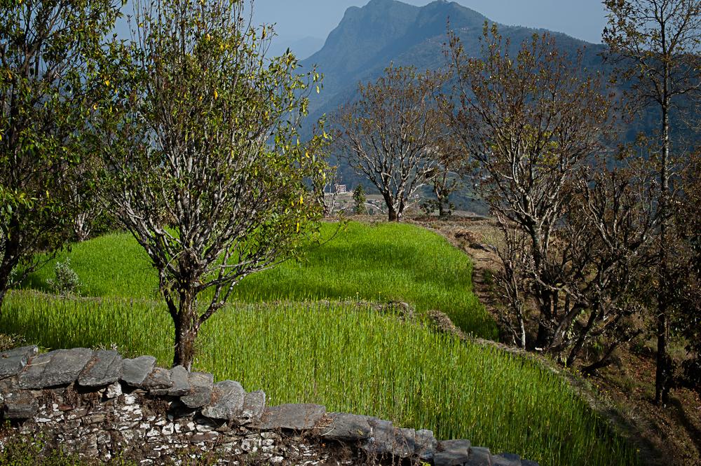 3_Nepal_096